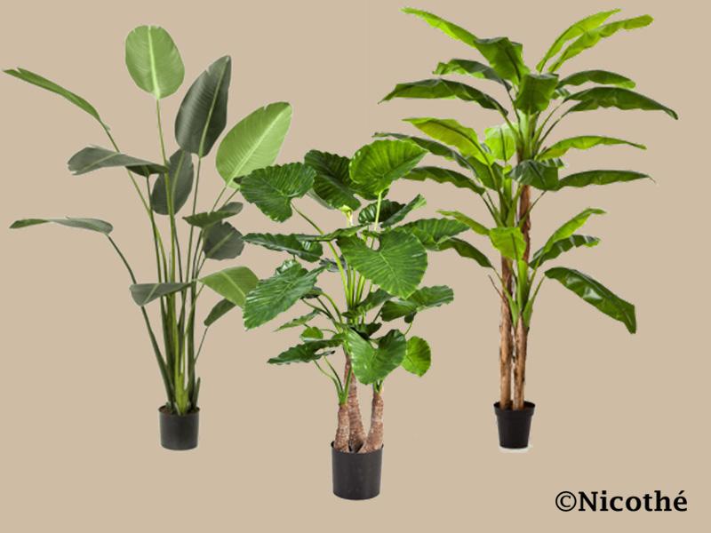 Zijde planten kopen drunen