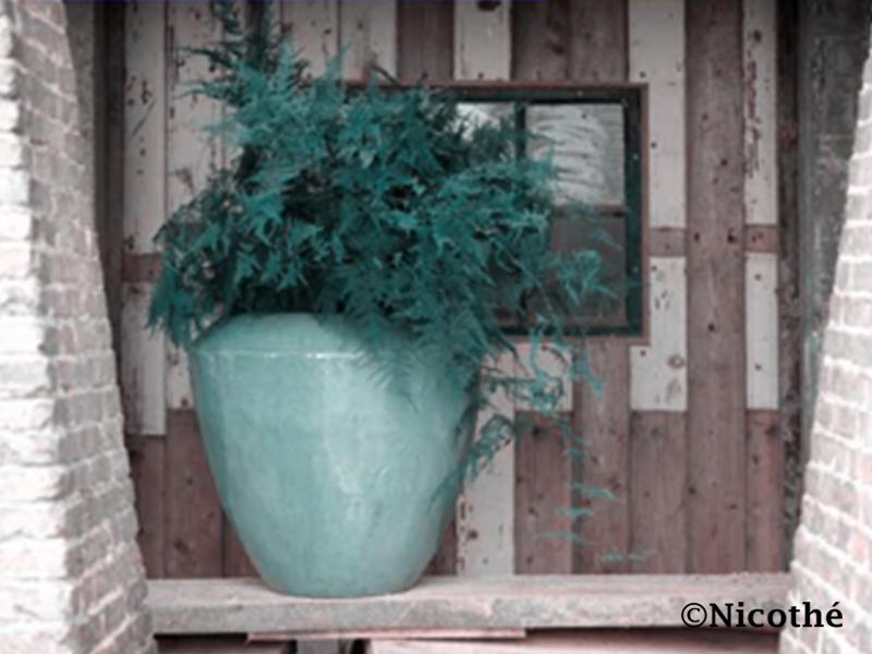 Plantenarrangement thuis