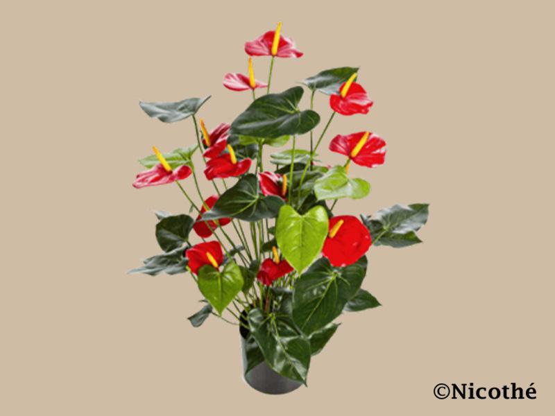Zijde bloemen kopen